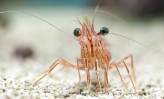 shrimp electricity sustainability