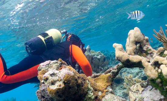 Ecotourism in Cuba
