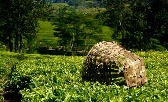 africa, tea, blockchain, unilever