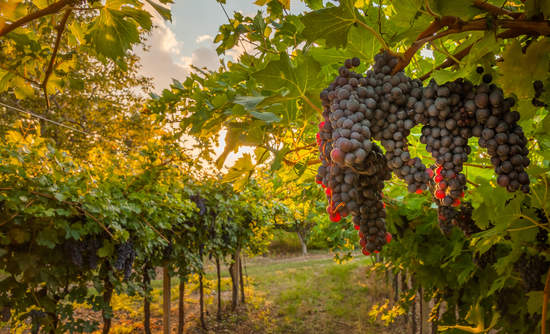 Napa Valley, conservation, vineyard, deforestation