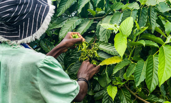 Africa smallholder farms and climate change insurance