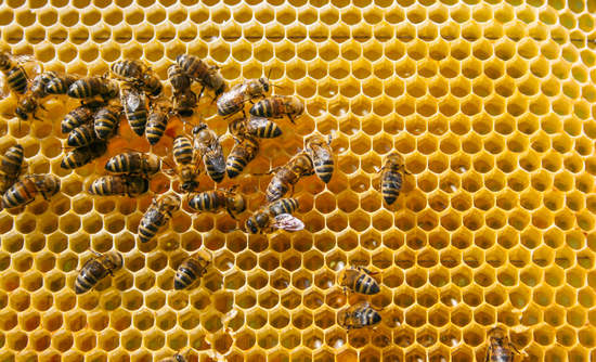 bees beehive collaboration collective action