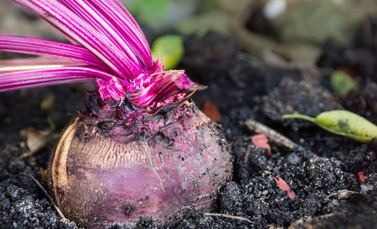 beets soil carbon and food system