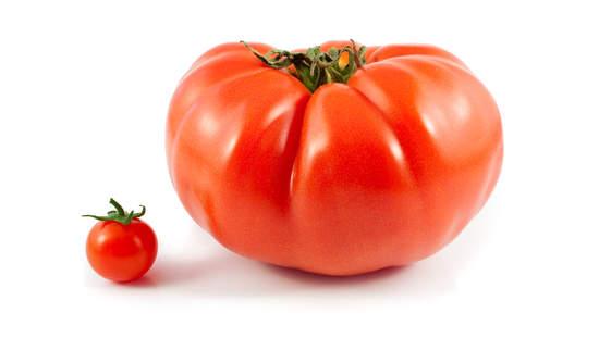 big tomato small tomato, big food and agriculture tech