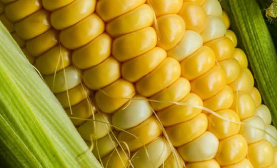 corn food farming sustainability