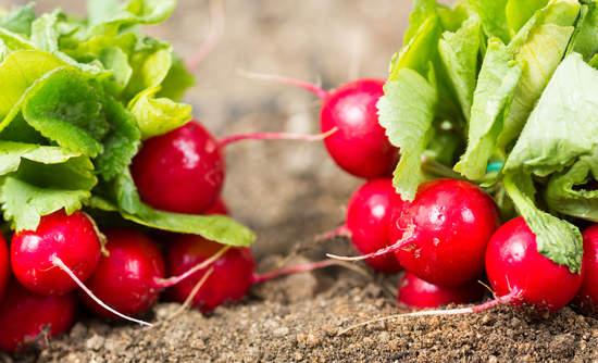 radishes, sustainable farming