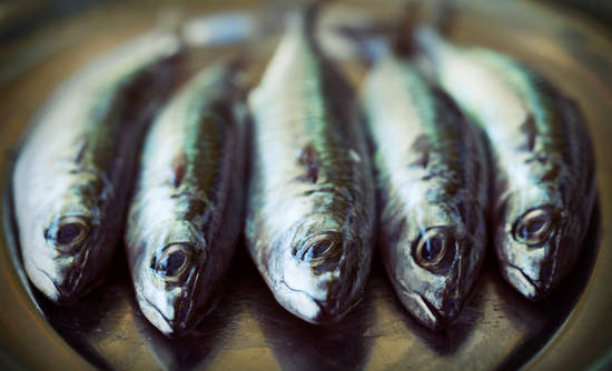 sustainable fish farming, aquaculture