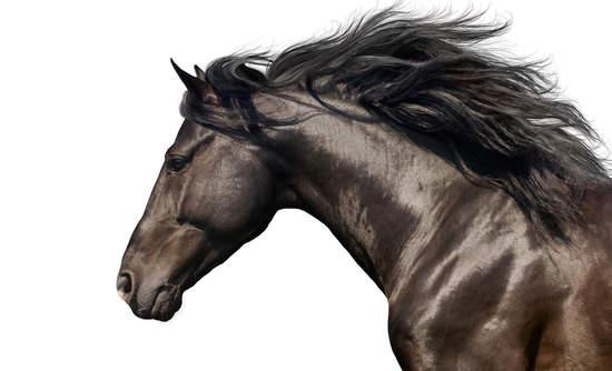 horse global risk
