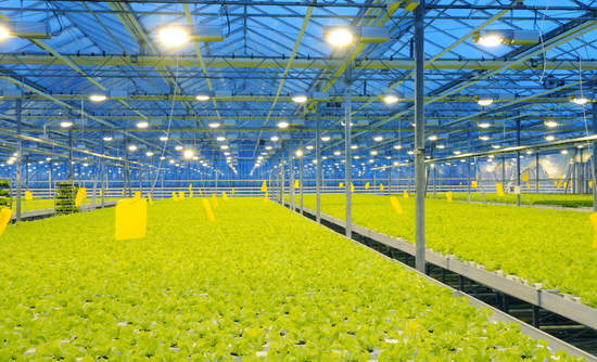 Are we headed for a green revolution in food and water?