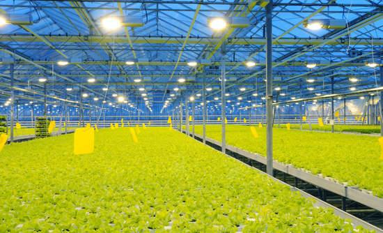 greenhouse sustainability