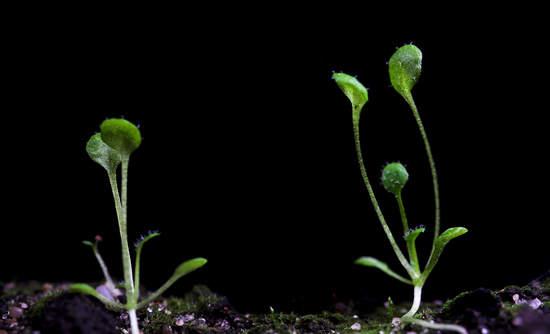 environmental big data Earth Genome Project