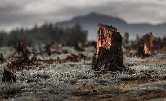 deforestation tree stump supply chain sustainability smallholders