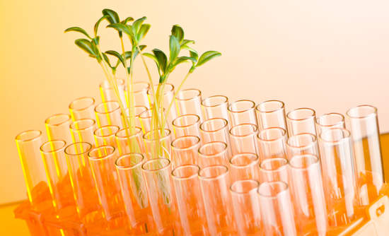 sustainable development and science