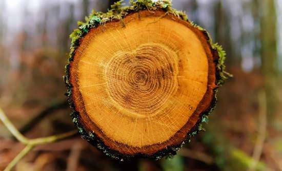 deforestation tree chopped down