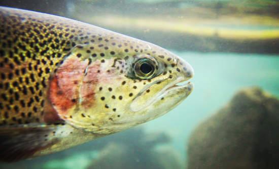 bacteria technology sustainable fish farming