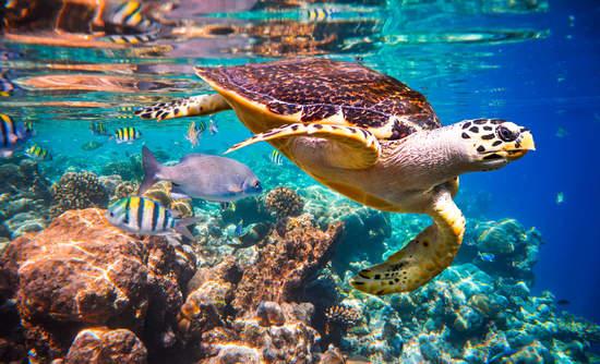 ocean ecosystem and habitat marketplaces