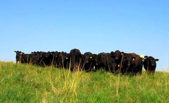 carbon farming, Soil Carbon Cowboys