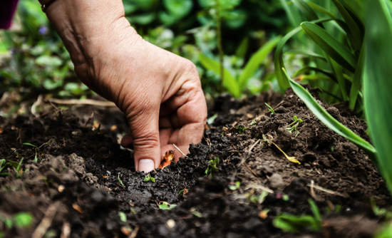 Close up of person's hand in soil