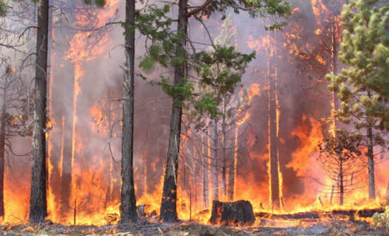 A rim fire in the Stanislaus National Forest in California that began on Aug. 17, 2013.