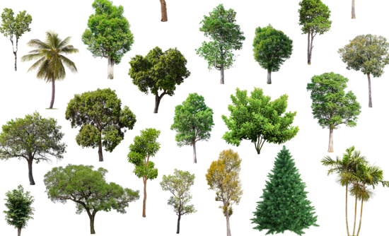 trillion trees