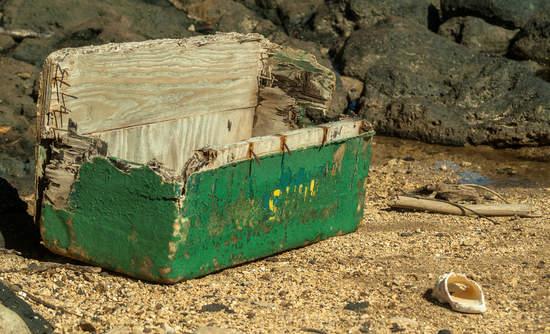 A wooden trunk awash on a Kauai shore