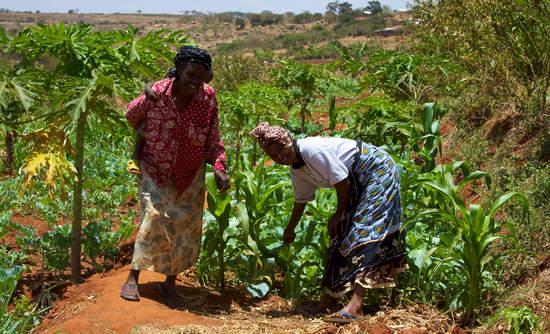 Smallholder farmers in Kenya.
