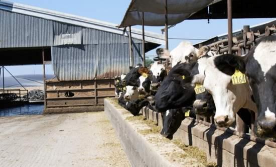 Turning manure to methane