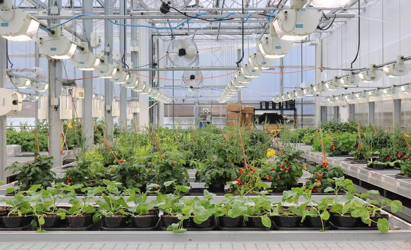 Terramera greenhouse