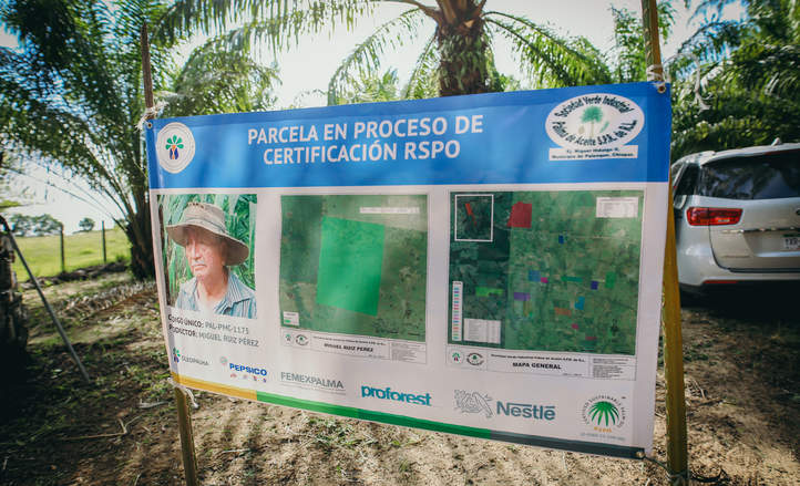Palm oil buyers cultivate Mexico s ambition to grow a sustainable industry