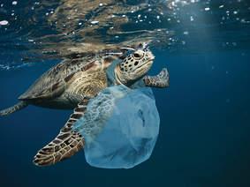 Turtle, ocean plastics