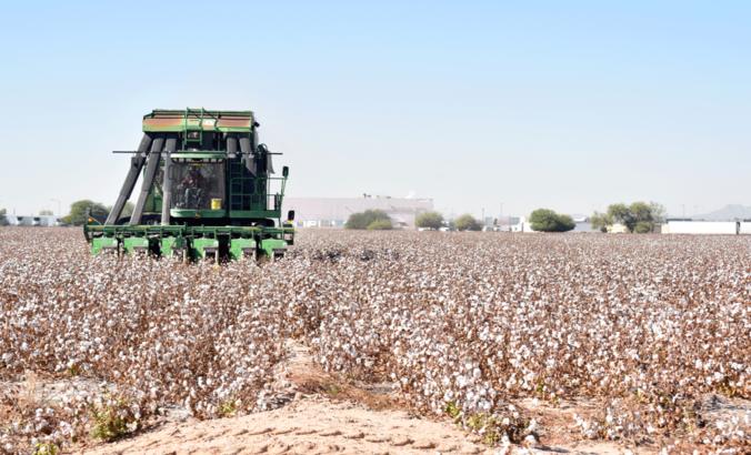 A John Deere cotton harvester harvesting cotton in Goodyear, Arizona