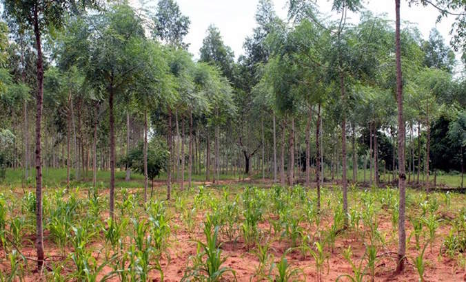 Forest restoration gets a tiny fraction of the money it needs featured image