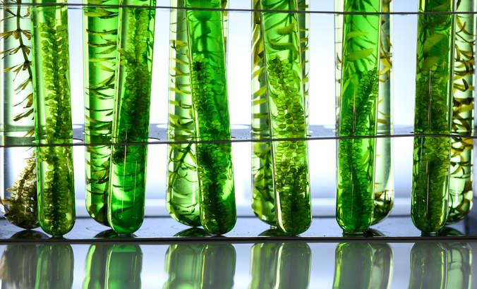 Algae in test tubes