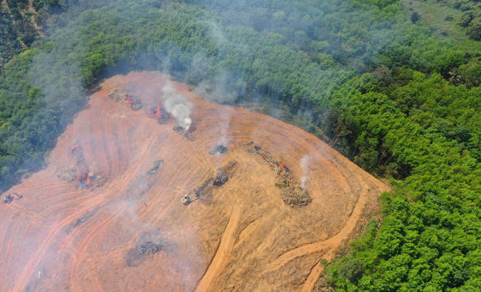 Smoke and fire as rainforest cut and burned for palm oil industry