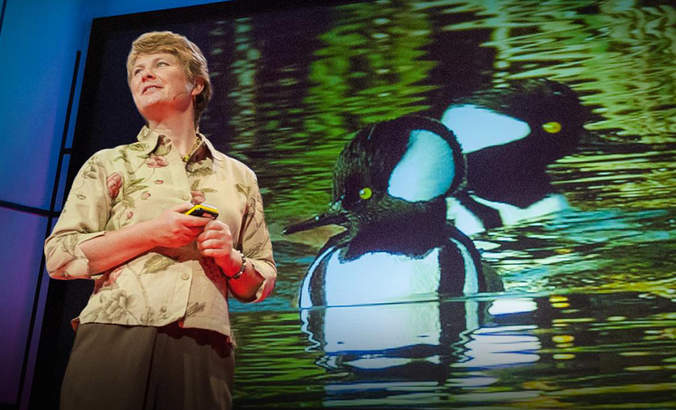 Biomimicry @ 20: A conversation with Janine Benyus featured image