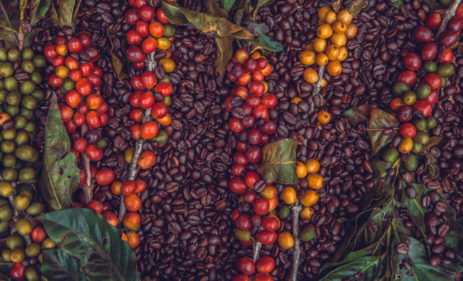 The texture of coffee beans and coffee berries