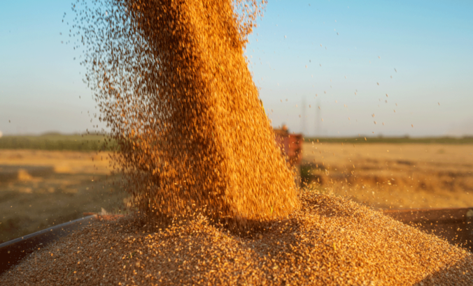 A combine harvester pouring grain into a tractor-trailer during harvesting.