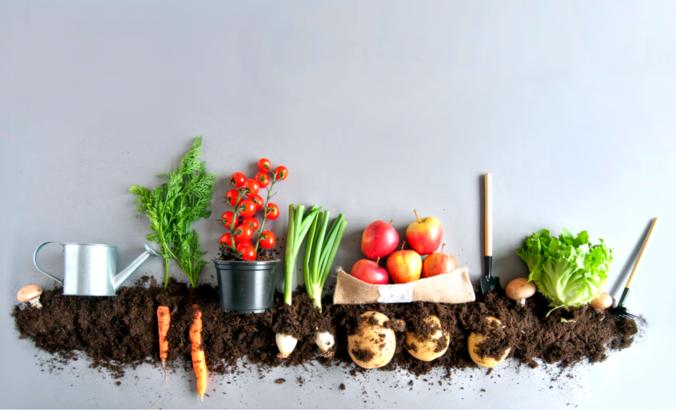 Food being grown