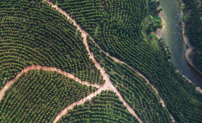 Apple's sustainable forestry strategy branches out featured image