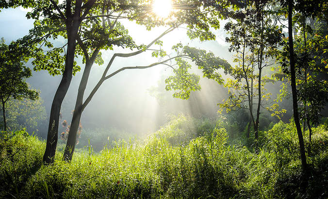 Landscape conservation: The opportunity for companies and supply chains featured image