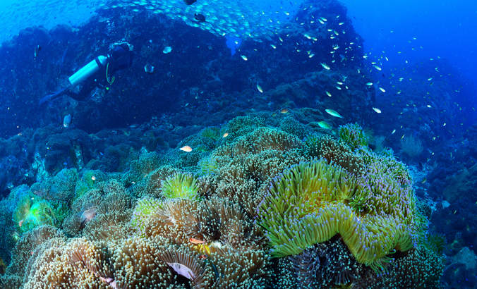 Dear Southeast Asian nations: Dive deep into marine preservation featured image