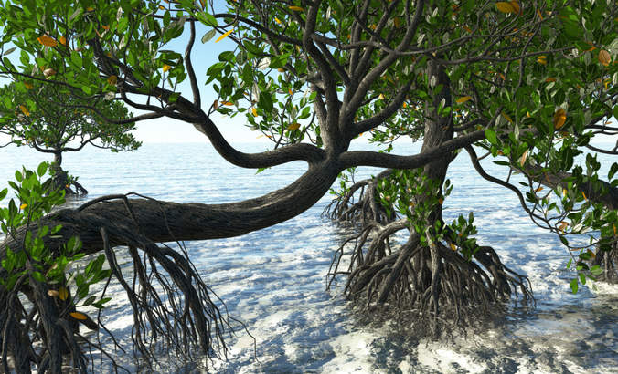 What is 'blue carbon' and how does it help protect our coastal ecosystems? featured image