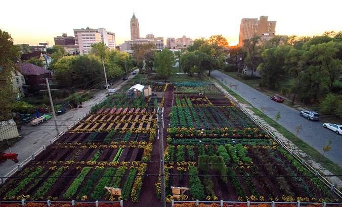 Verdant Detroit: Can 'agrihoods' revitalize urban centers? featured image