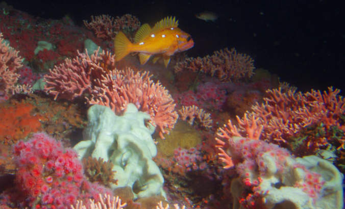 Preserving this national marine sanctuary guards natural resources featured image