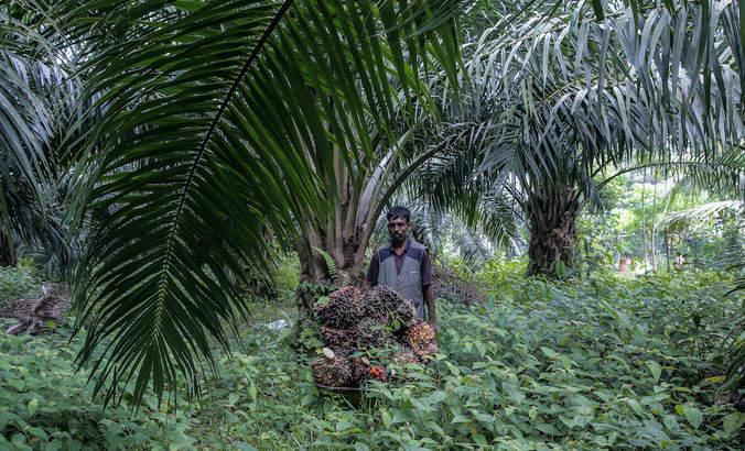 palm oil plantation, kuala lumpur, malaysia
