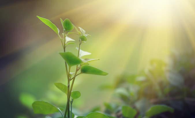 Plant, photosynthesis