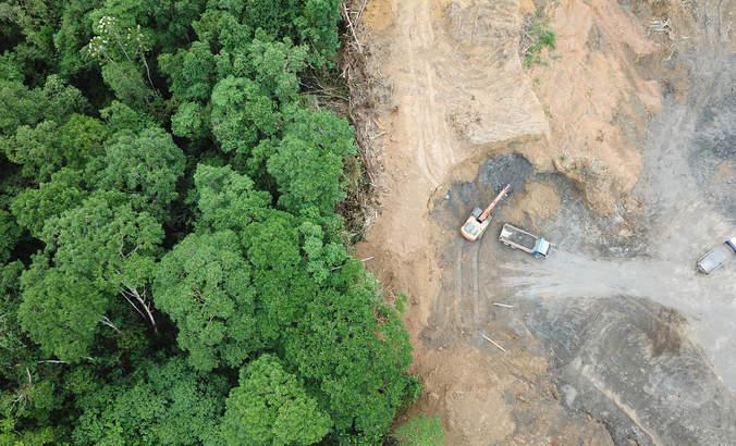 Ending deforestation: A collective effort featured image