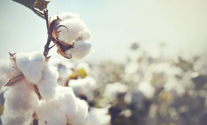 Why climate change is material for the cotton industry featured image