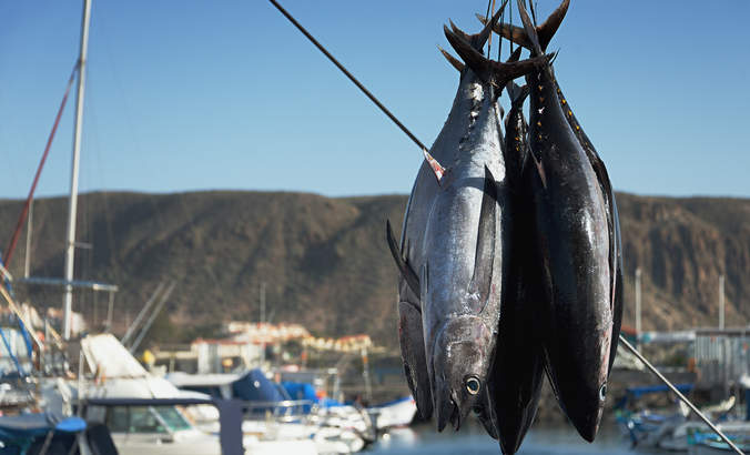 Tuna giant Thai Union pledges to fish more sustainably featured image