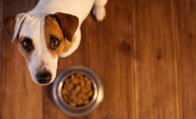 A big pawprint: The environmental impact of pet food featured image